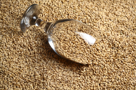 barley malt: Beer glass full of barley malt lying on malt grains