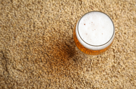 barley malt: Glass full of light beer standing on barley malt grains
