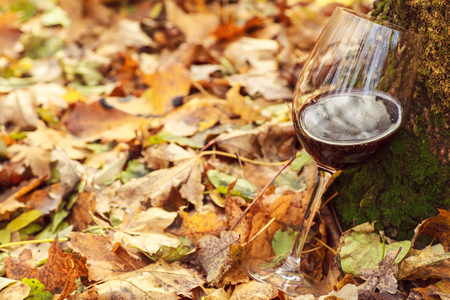 Glass of red wine standing on yellow leaves in an autumn forest