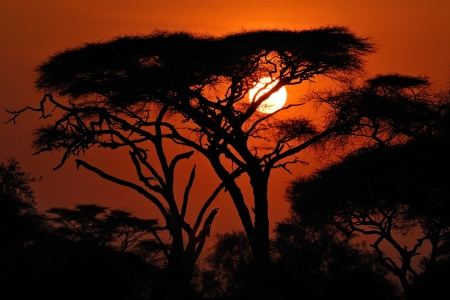 Acacia tree before sun set down in Amboseli park, Kenya photo