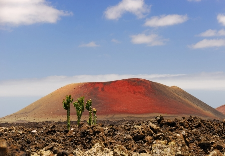 Cactus grows in the lava filled field against the red volcano mountain photo
