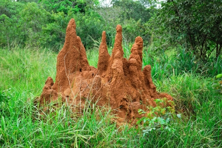Big termite mound in Northern Uganda