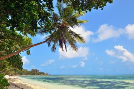 sich b�cken: A Palmen �ber einem leeren Ozean K�ste auf den Seychellen Inseln zu biegen. La Digue Lizenzfreie Bilder