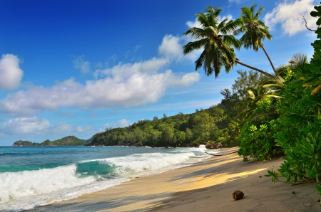 A palm trees bend over an empty sandy beach on Seychelles islands  Mahe, Anse Takamaka