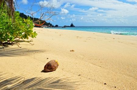 Tropical sandy beach on Seychelles islands  Mahe, Anse Soleil Stock Photo - 13870642