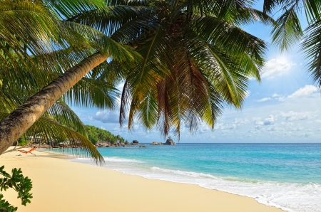 A palm tree bends over an empty sandy beach on Seychelles islands. Mahe, Anse Soleil Stockfoto