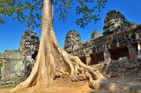 Giant banyan  tree growing on the ruins of the temple Bantey Khde in Angkor Wat, Siem Reap, Cambodia photo