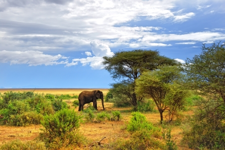 African landscape  lonely elephant in the Mayara lake national park, Tanzania Stock Photo