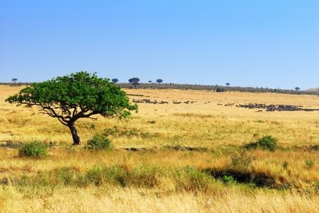 mara: African landscape with antelope gnus, Masai Mara, Kenya