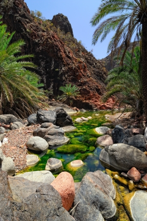 Mountain river amongst rocks on background of the mountains and palms tree, Socotra, Yemen
