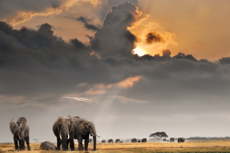Puesta de sol de África con los elefantes, el Kilimanjaro de montaña en el fondo Foto de archivo