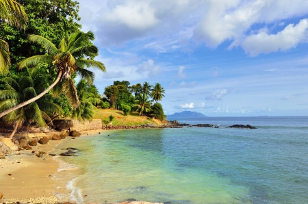 sich b�cken: A Palmen �ber einem leeren Ozean K�ste biegen auf den Seychellen Inseln Mahe