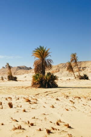 Small oasis in the Sahara desert, Egypt photo