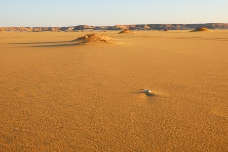 The Sahara desert, Abu Monkar dunes, Egypt Imagens - 13943834