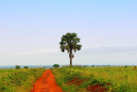 Off road in the savannah, northern Uganda photo