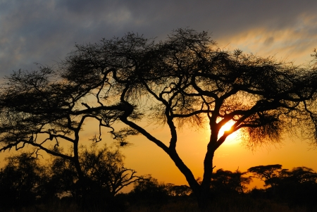 Acacia tree before sun set down in Amboseli park, Kenya Imagens