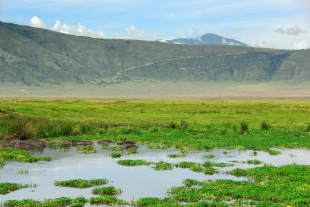 Hippo pool inside the Ngorongoro crater, Tanzania
