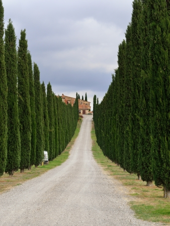 Idyllic Tuscan landscape with  dirt road and cypress near Pienza, Vall dOrcia Italy, Europe