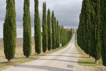 Idyllic Tuscan landscape with dirt road and cypress near Pienza, Vall dOrcia Italy, Europe photo