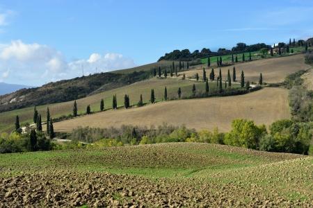 agriturismo: Idyllic rural Tuscan landscape near Pienza, Vall d