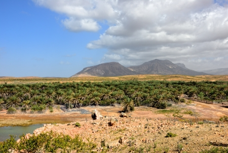 Landscape of Socotra island, Yemen. River, palm trees plantation and high mountain on background  Imagens