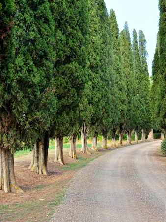 agriturismo: Idyllic Tuscan landscape with dirt road and old cypress valley near Pienza Stock Photo