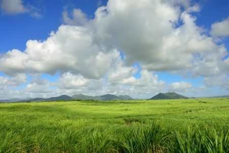 Sugarcane plantation on tropical island of Mauritius Imagens
