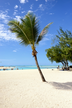 Coconut tree by the seaside  Beach of small tropical island of Cerf, Mauritius photo