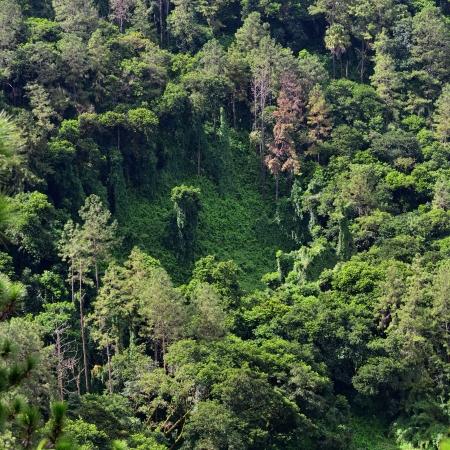 Aerial view on tropical rainforest, Mauritius