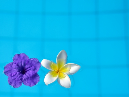 Tropical flowers on the blue water, concept for tropical vacation, relax and spa photo