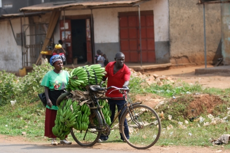 KAMPALA, UGANDA - AUG 26: Native people carry bananas by bike to market on Aug 26, 2010 in slum of Kampala, Uganda. Nearly 40% of slum dwellers have a monthly income of just 2,500 shillings – less than a dollar,  98% of those are women
