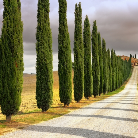Idyllic Tuscan landscape with cypress alley at sunset near Pienza, Vall d