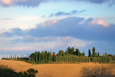 Idyllic rural Tuscan landscape with old farmhouse near Pienza at sunset, Vall d photo