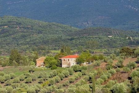 messenia: Rural landscape with farmhouse and olive garden  Messenia, Greece Stock Photo