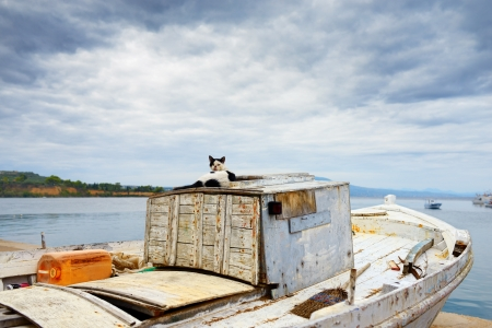 messinia: Evening time in the medieval town of Koroni  Cat on the fishing boat, Greece Stock Photo