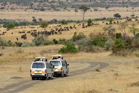 safari game drive: Masai Mara, Kenya - 21 Agosto, 2010 game drive Safari su safari furgoni con tetto aperto nel Masai Mara agosto � un periodo di alta stagione per la migrazione degli animali in questa parte dell'Africa