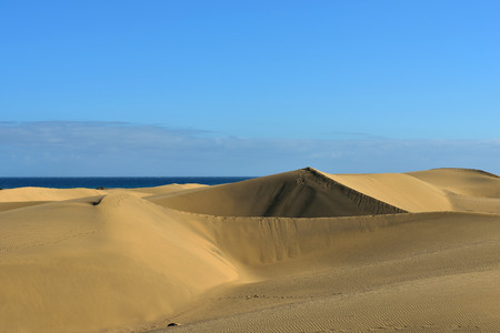 Famous natural park Maspalomas dunes in Gran Canaria at evening time, Canary island, Spain