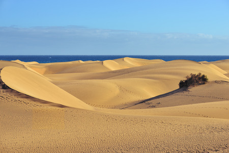 Famous natural park Maspalomas dunes in Gran Canaria at evening time, Canary island, Spain photo