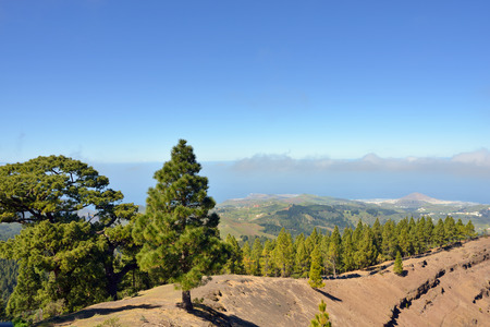 Pine forest on ridge of the caldera de los Pinos  against rural landscape  Gran Canaria, Spain Stock Photo