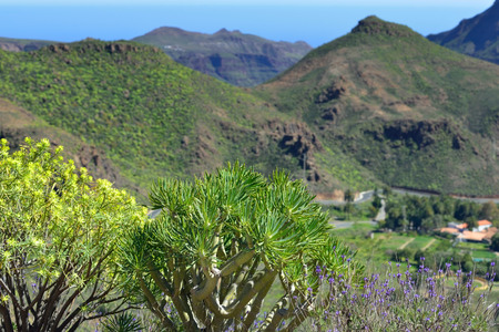 Beautiful mountain landscape with bright plant on foreground  Gran Canaria, Spain