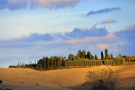 Idyllic rural Tuscan landscape with cypress alley along plowed field near Pienza at sunset, Vall d photo
