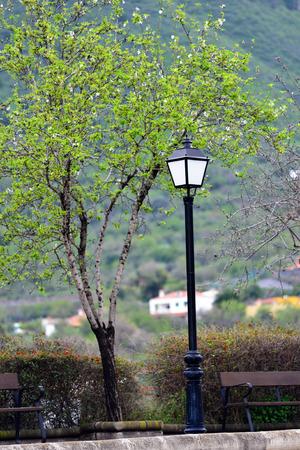 Streetlight against almond tree at spring morning, Gran Canaria