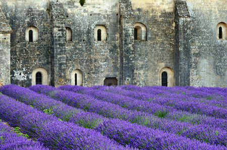 senanque: Most beautiful lavender field in Provence  An ancient monastery Abbaye Notre-Dame de Senanque   Abbey of Senanque    Vaucluse, France