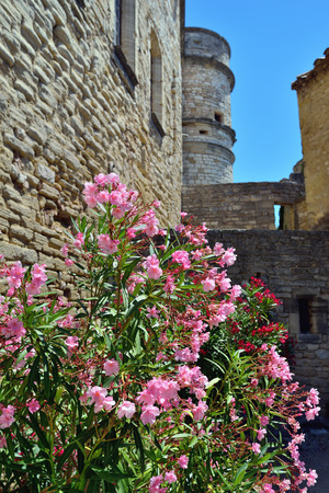 cited: big bush of blooming flower in the old castle Le Barroux, Provence, France Editorial