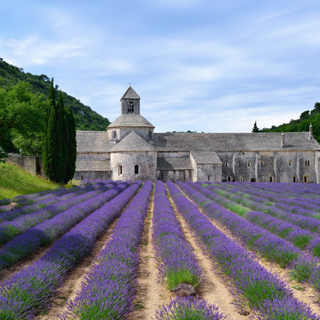 senanque: Most beautiful lavender field in Provence  An ancient monastery Abbaye Notre-Dame de Senanque   Abbey of Senanque  at early morning  Vaucluse, France  Stock Photo