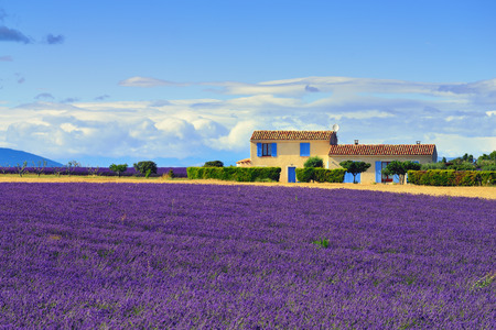 Stunning landscape with lavender field and farmhouse on background. Plateau of Valensole, Provence, France. Focus on lavander field