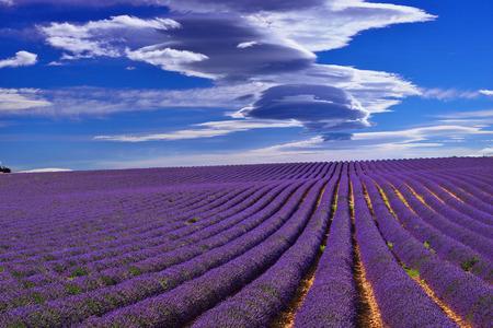 lavanda: Impresionante paisaje con campo de lavanda bajo el cielo dram�tico. Meseta de Valensole, Provence, Francia Foto de archivo
