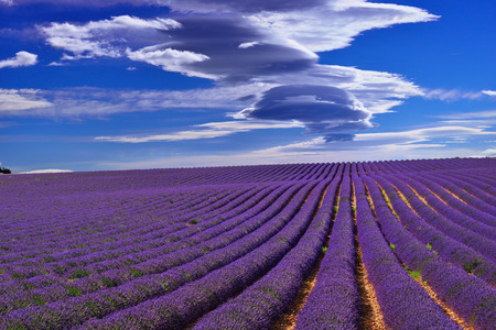 Stunning landscape with lavender field under dramatic sky. Plateau of Valensole, Provence, France Archivio Fotografico