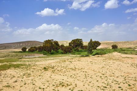 negev: Small oasis in the Negev desert, Israel