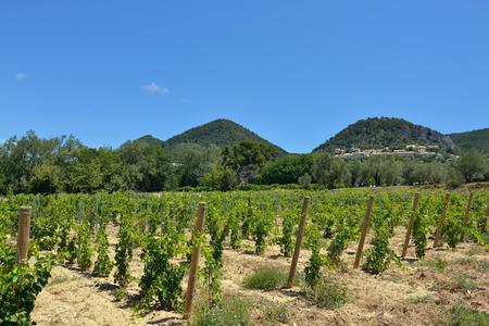 vaucluse: Rural landscape. Vineyards in Vaucluse Seguret village on background. Provence France